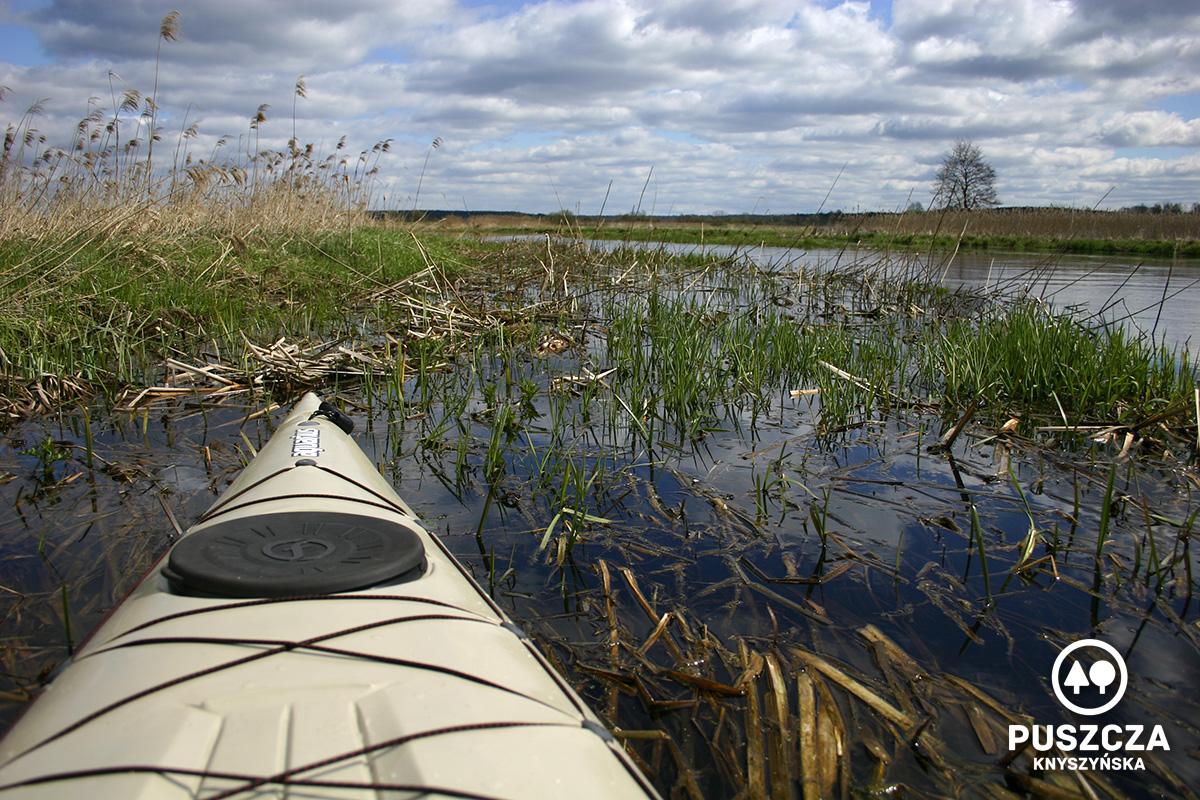 Okolice miejscowości Nowodworce | Rzeka Supraśl - Puszcza Knyszyńska