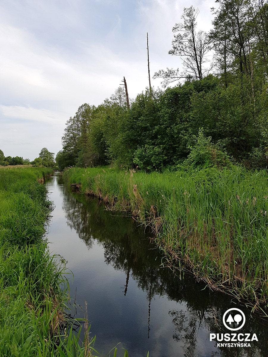 Spływ kajakowy rzeką Płoską - Puszcza Knyszyńska | www.puszczaknyszynska.com.pl